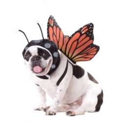 Animal_Planet™_Butterfly_Dog_Costume