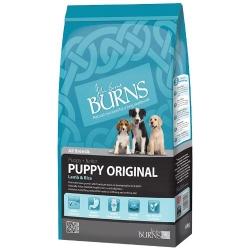 Lamb - Burns Puppy