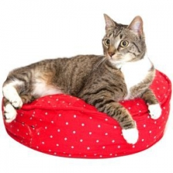 bird on wire cat bed