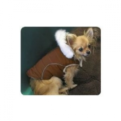 brown dogs coat