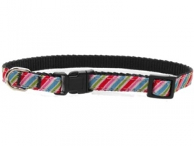 Brighton Stripe Dog Collar
