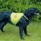 Dog Safety Waistcoat